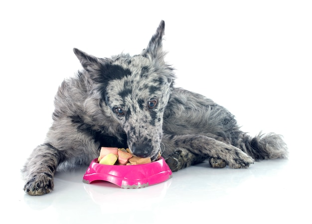 Mangiare un cane ungherese Foto Premium