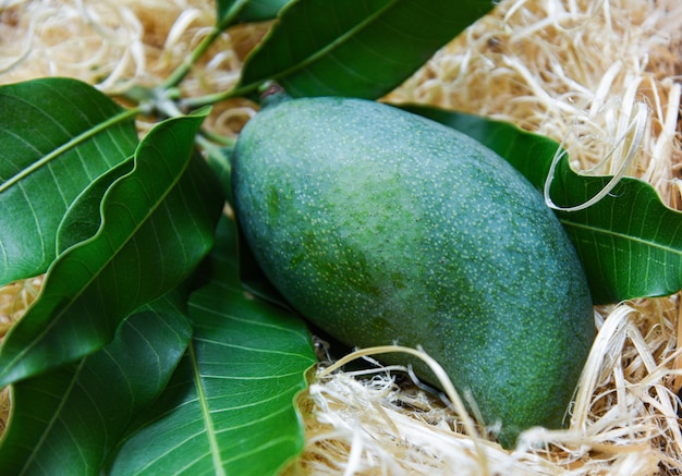 Mango verde fresco e foglie verdi su bambù, frutta estiva mango raccolto mango Foto Premium