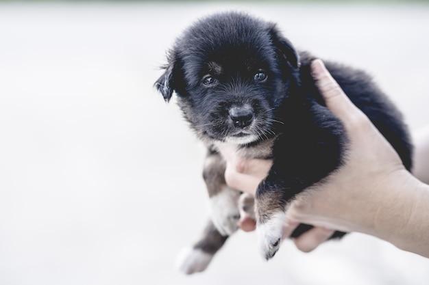 Mani che tengono un cucciolo nero Foto Premium