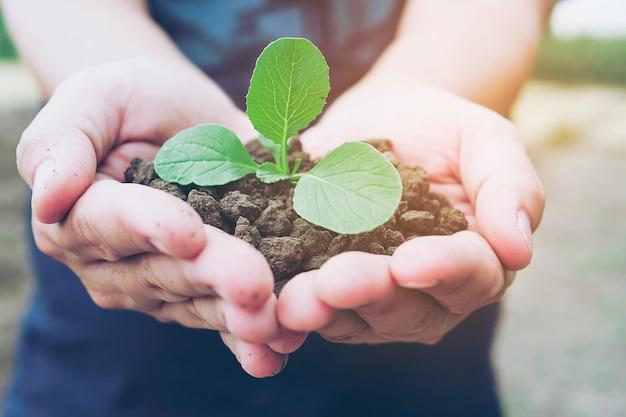 Mani che tengono una piccola pianta verde che cresce nel terreno sano marrone con luce calda Foto Gratuite
