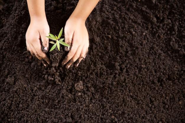 Mani del bambino tenendo e prendersi cura di una giovane pianta verde Foto Gratuite