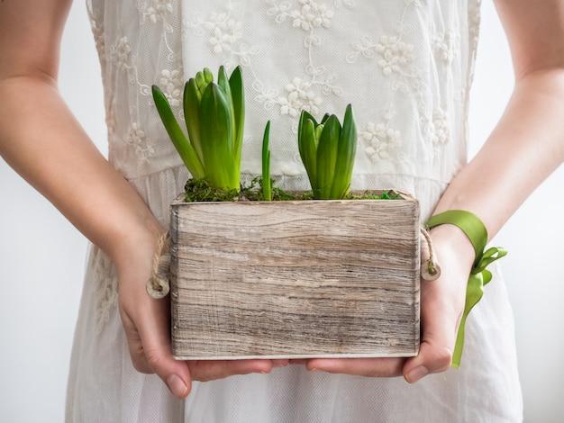 Mani femminili che tengono i giovani germogli di giacinti Foto Premium