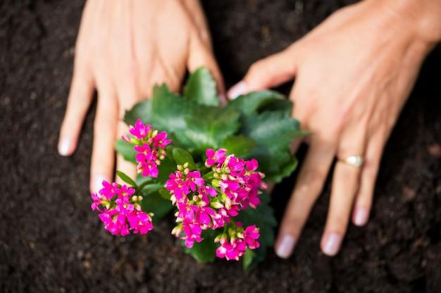 Mani potate della donna che pianta i fiori Foto Premium