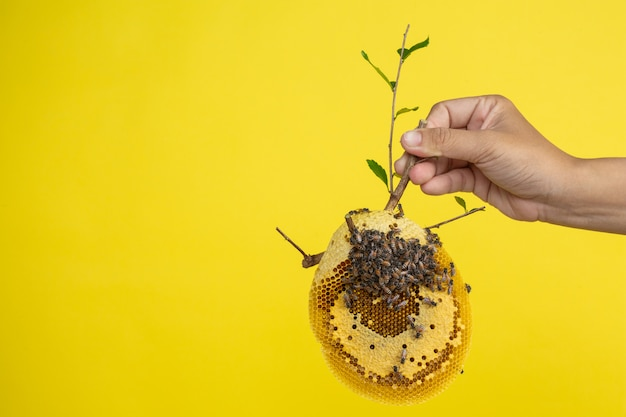 Maniglia a nido d'ape su uno sfondo giallo in studio. Foto Gratuite