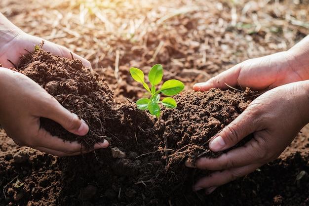 Mano che aiuta piantando albero in giardino. concetto di eco Foto Premium