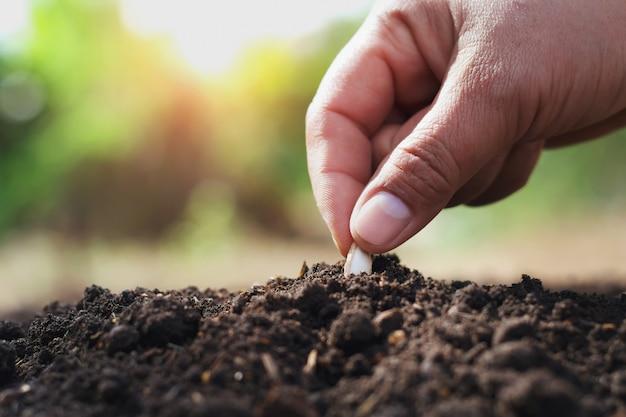 Mano che pianta il seme di zucca nell'orto Foto Premium