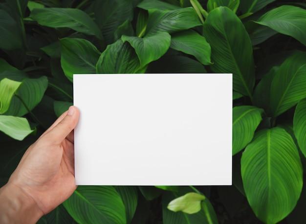 Mano che tiene il libro bianco sulla foglia verde Foto Premium