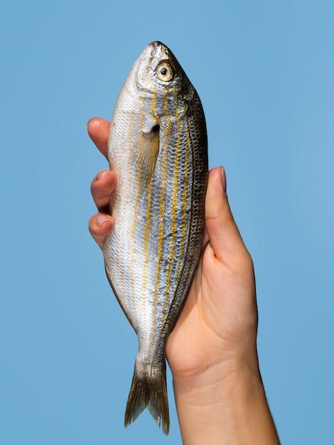 Mano che tiene pesce fresco con il primo piano Foto Gratuite