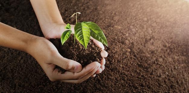 Mano che tiene piccolo albero per piantare. concetto di mondo verde. giornata della terra eco Foto Premium
