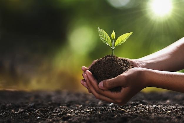 Mano che tiene piccolo albero per piantare. concetto mondo verde Foto Premium