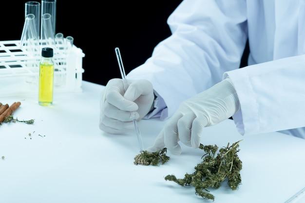 Mano del dottore tenere e offrire al paziente marijuana medica e olio. Foto Gratuite