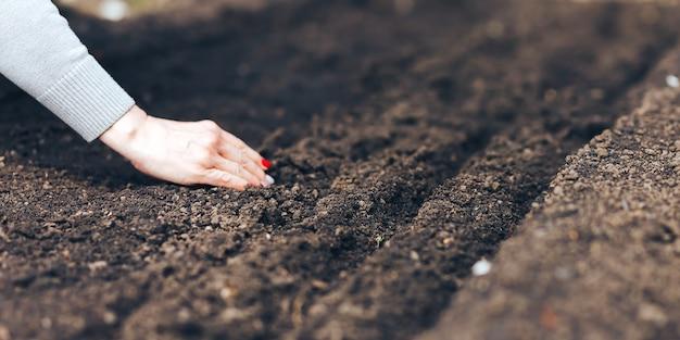 Mano della donna che mette seme nel suolo in primavera. seminare semi di ortaggi la mano della donna produce piccoli semi nella terra nera Foto Premium