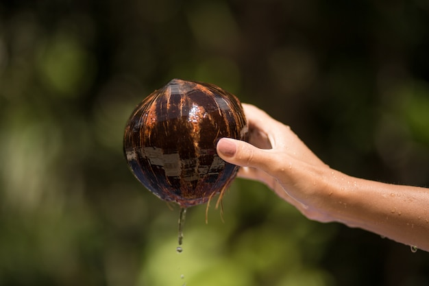 Mano della donna estratta noce di cocco dall'acqua. Foto Premium