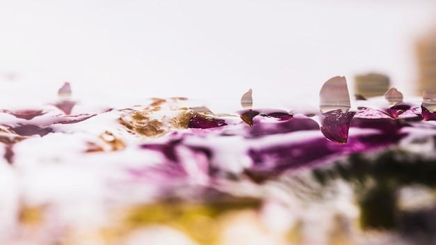 Margherite colorate bagnate su sfondo bianco Foto Gratuite
