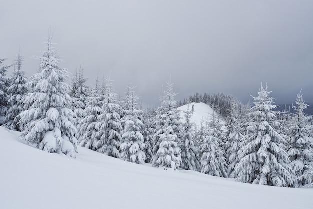 Mattina inverno calma paesaggio montano con glassa di abeti e piste da neve pista da sci sul pendio della montagna Foto Gratuite