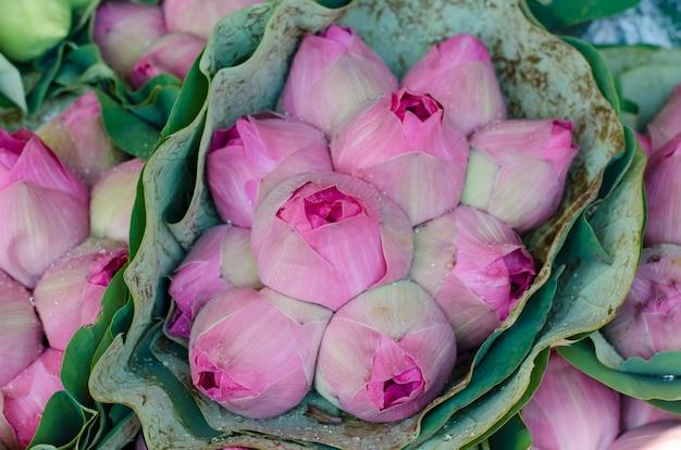 Mazzo di germogli di loto fresco nel mercato dei fiori (pak klong talad, thailandia) Foto Premium