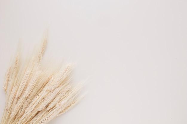 Mazzo di rametti di grano Foto Gratuite