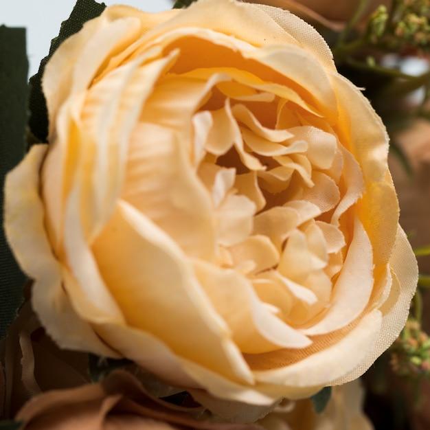 Mazzo di rose di fioritura del primo piano Foto Gratuite
