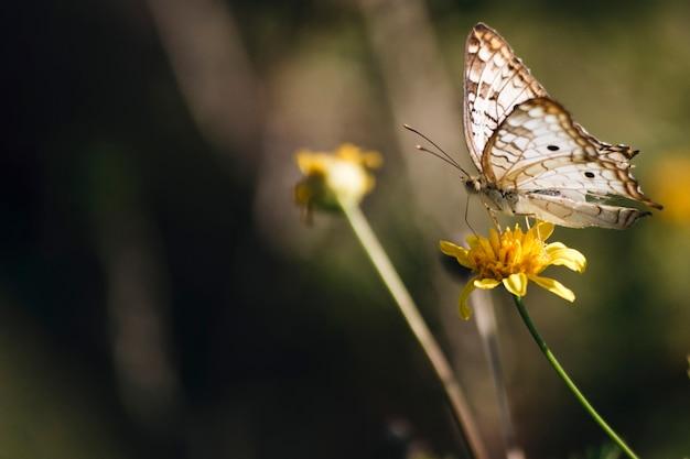 Meravigliosa farfalla sul fiore Foto Gratuite