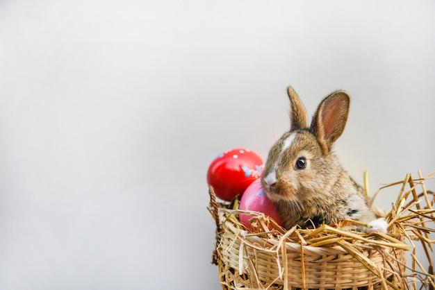 Merce nel carrello di seduta del coniglio delle uova di pasqua e del coniglietto di pasqua Foto Premium