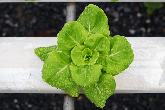 Metodo di coltura idroponica Foto Premium