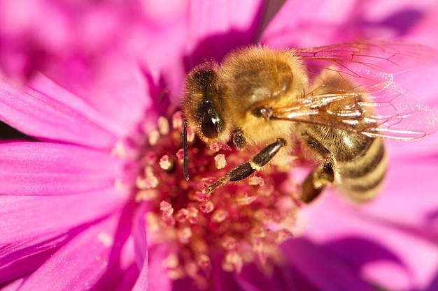 Miele insetto fiore pianta ape scaricare