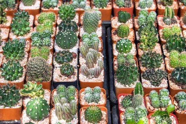Mini giardino del cactus in scuola materna, piantagione del succulente del cactus Foto Premium