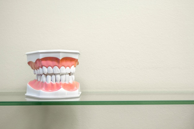 Modelli di denti umani in plastica su mensola in vetro, colori chiari Foto Premium