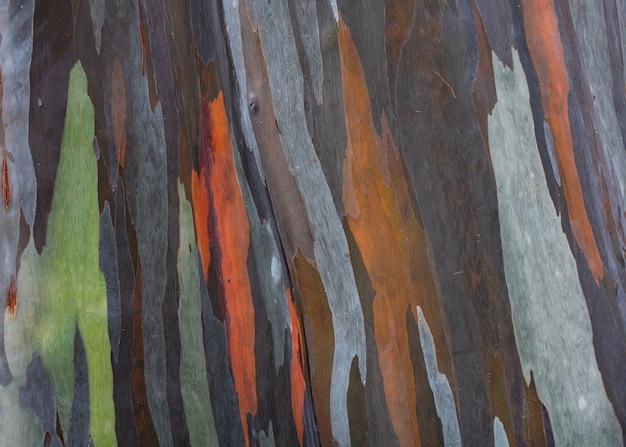 Modello colorato sulla corteccia dell'albero tropicale Foto Premium