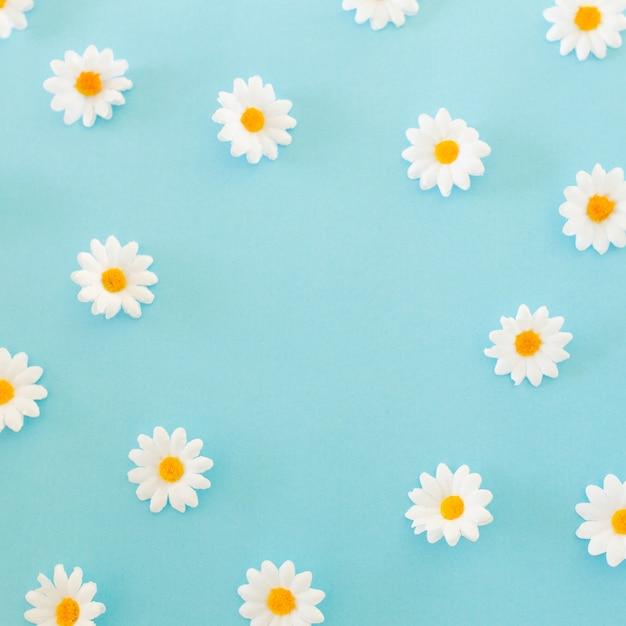 Modello fatto di chamomiles, petali su sfondo blu. vista piana, vista dall'alto Foto Gratuite
