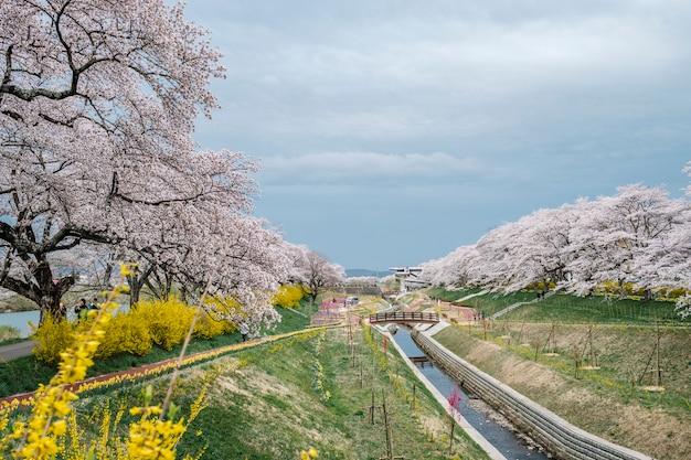 Modo di percorso sakura Foto Gratuite