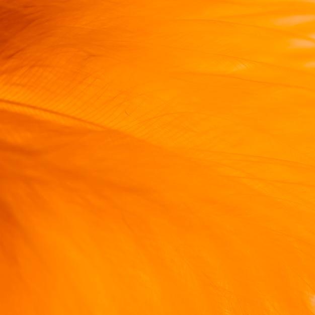 Molte fibre arancioni astratte di piuma Foto Gratuite