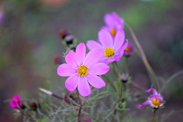 Molte foto di fiori. collage. messa a fuoco selettiva Foto Premium