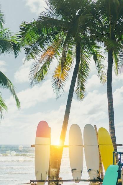 Molti surf accanto ai cocchi alla spiaggia di estate con la luce del sole e il fondo del cielo blu. Foto Premium