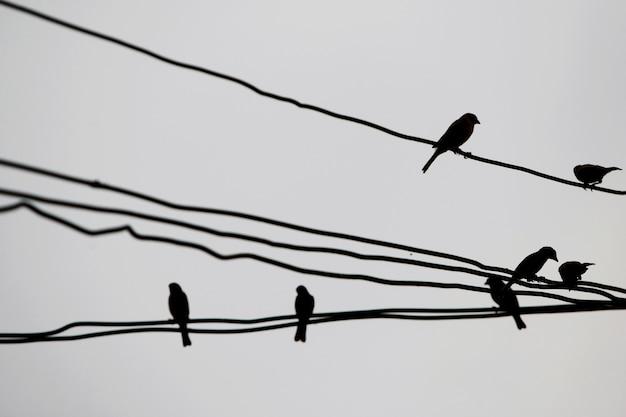 Molti uccelli appollaiati su fili elettrici Foto Premium