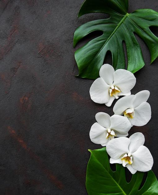 Monstera tropicale delle foglie e fiori bianchi dell'orchidea Foto Premium