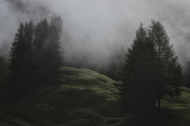 Montagna con pini ricoperti di nebbie Foto Gratuite