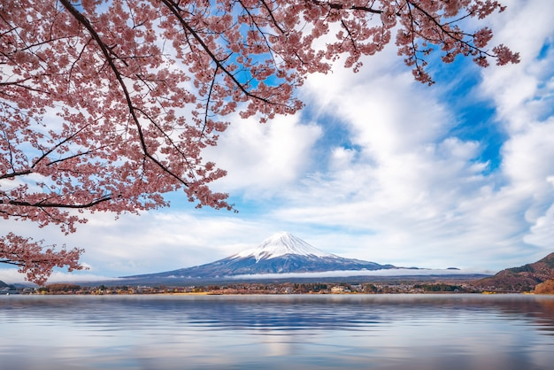 Montagna fuji con fioritura allegra piena fioritura nel lago kawaguchiko Foto Premium