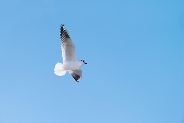 Mosca dell'uccello del gabbiano nel cielo blu Foto Gratuite