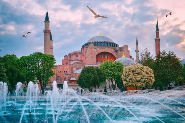 Moschea aya sofia con gabbiani nel cielo Foto Premium