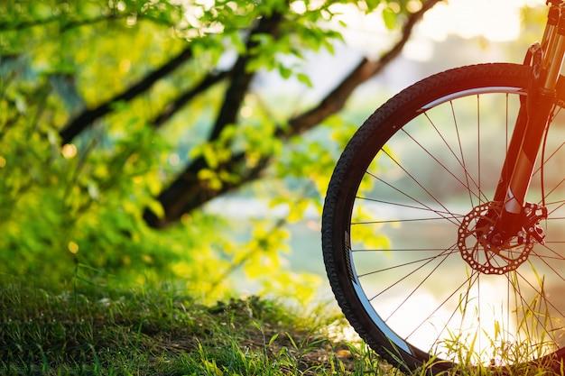 Mountain bike nella foresta al tramonto. Foto Premium