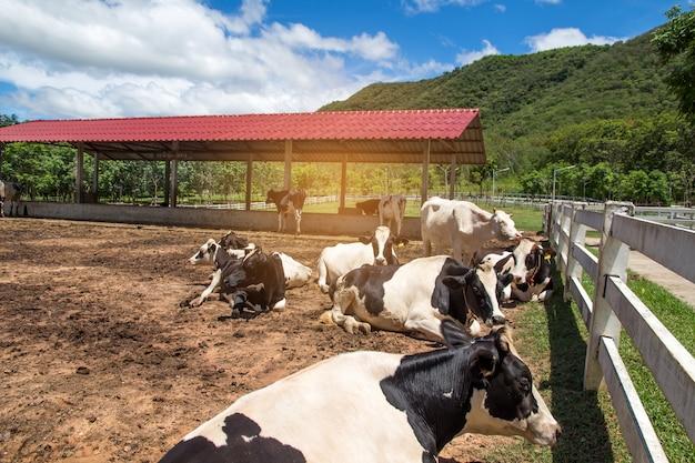Mucca e vitello in fattoria sullo sfondo della natura Foto Premium