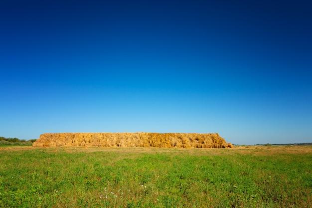 Mucchi di fieno sul campo di grano sotto il bellissimo cielo nuvoloso blu Foto Premium