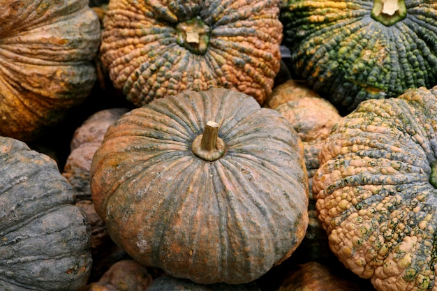 Mucchio di zucche di colore ruvido verde e arancione Foto Premium