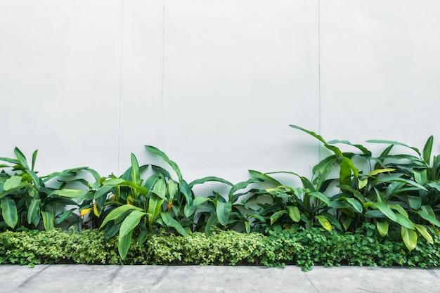 Muro bianco con foglia di albero sul muro Foto Gratuite