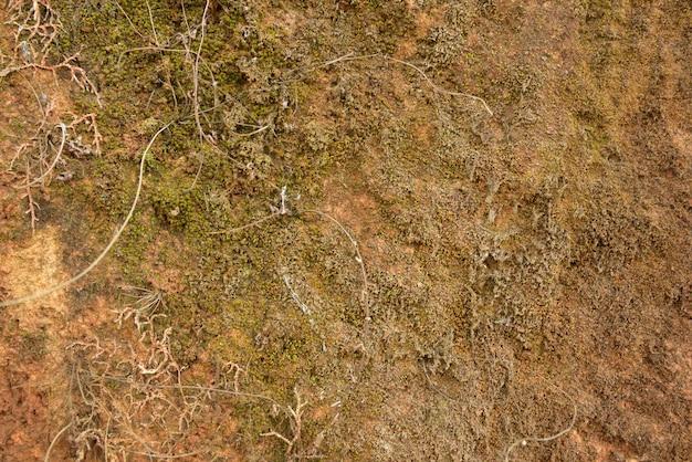 Muschio verde su struttura e fondo di pietra Foto Premium