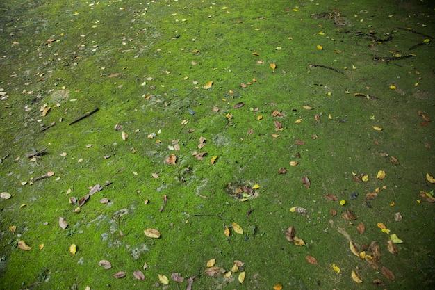 Muschio verde su terra nella giungla della foresta Foto Premium