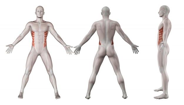 Muscoli lombari Foto Gratuite
