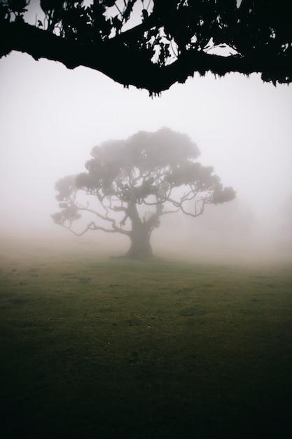 Mystical fanal nella foresta nebbiosa di laurisilva Foto Premium