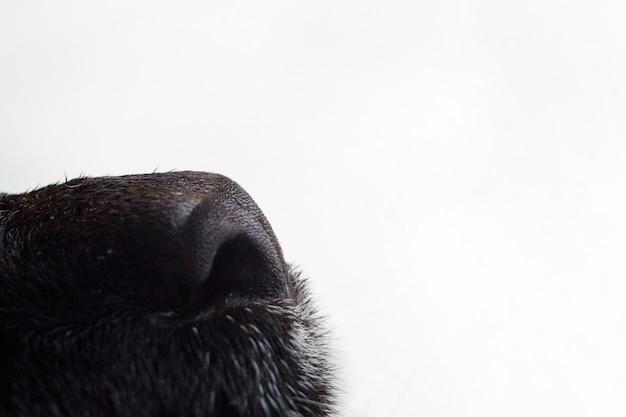 Naso di gatto nero Foto Premium